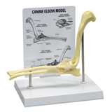 Personalized Canine Elbow Model